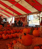 PumpkinPatch10-19_3.jpg