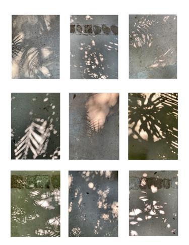 Leaf Shadows, Mexico, III