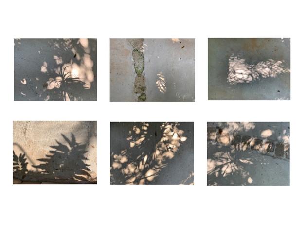Leaf Shadows, Mexico, V