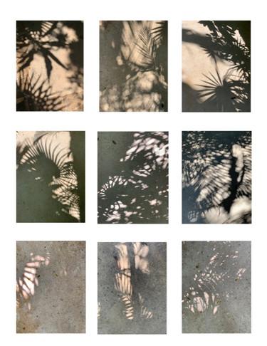 Leaf Shadows, Mexico, II
