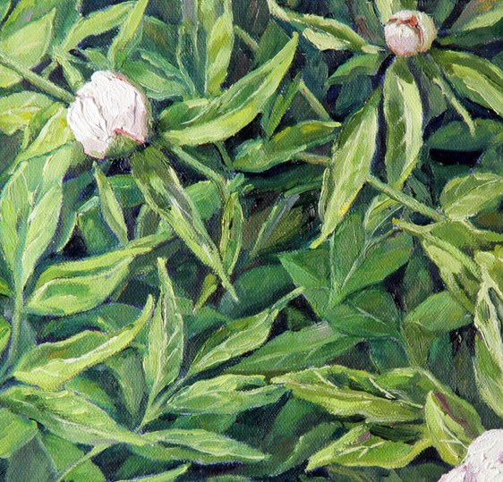 White Peony Buds