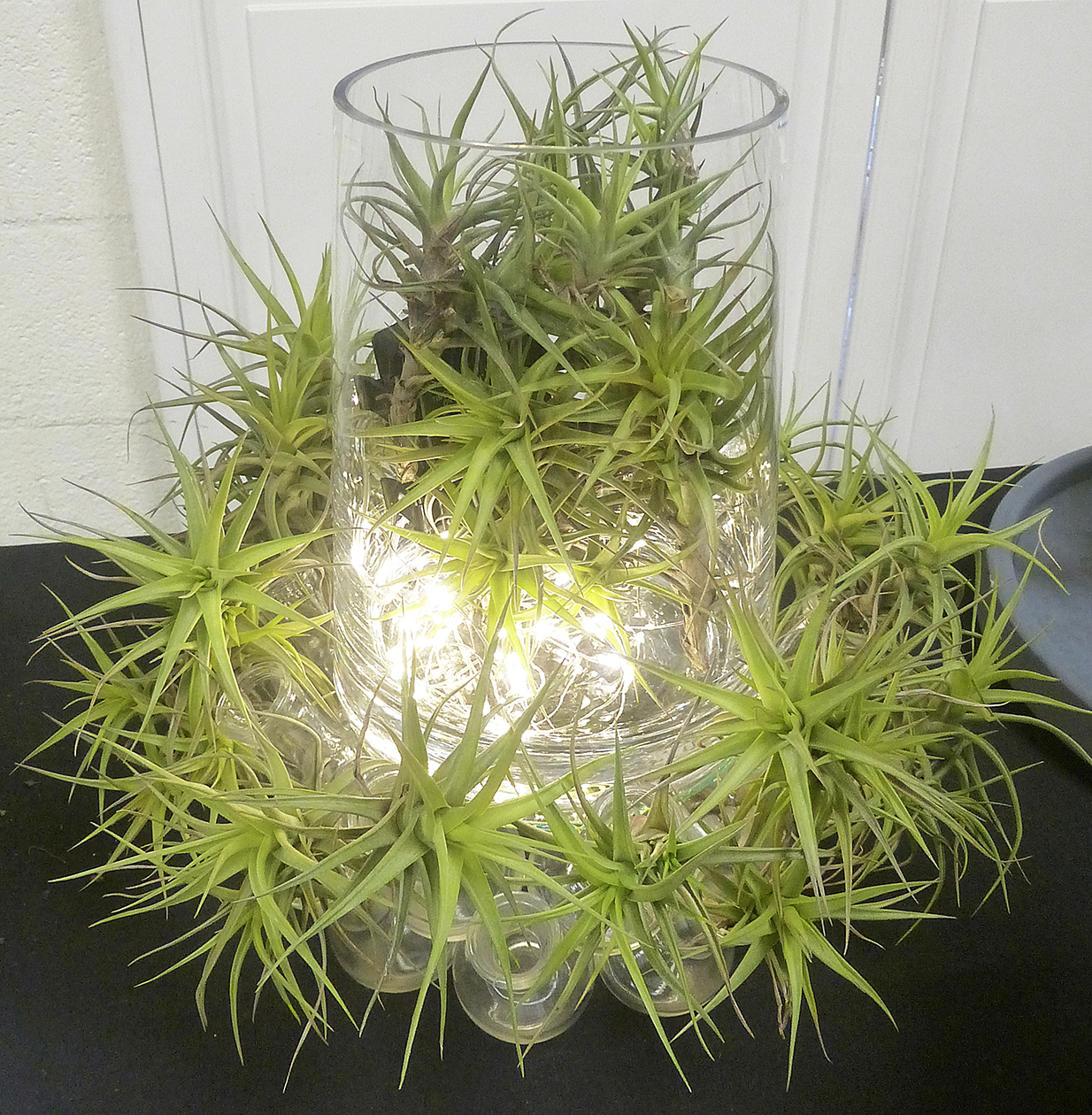 LAGC Inspiration - Airplant