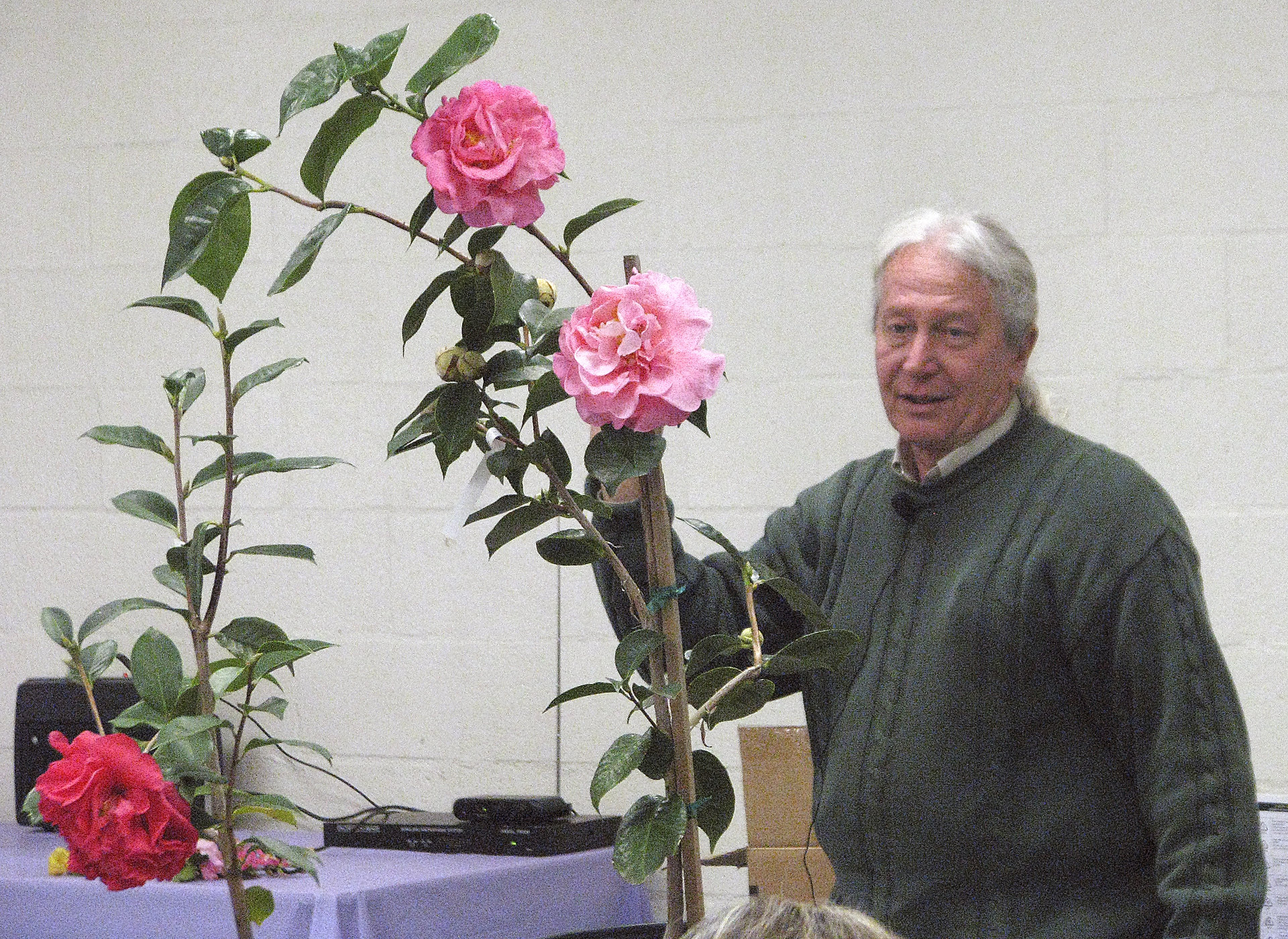 George Harrison - Camellias