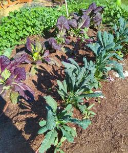 LAGC Volunteer Gardening