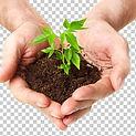 hands holding seedling 2.jpg