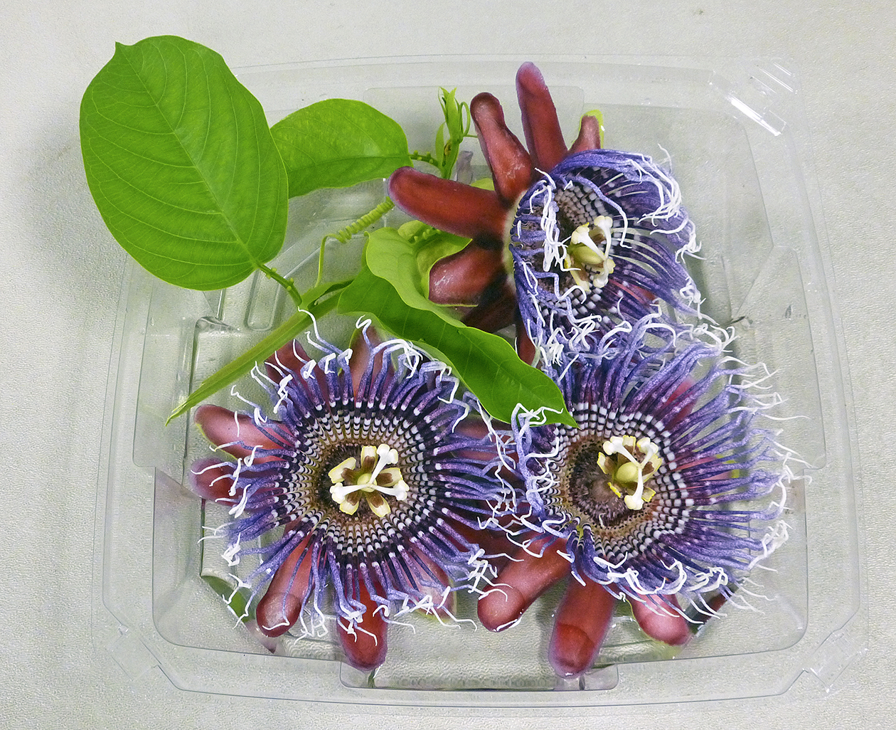 LAGC Inspiration - Passion Flowers