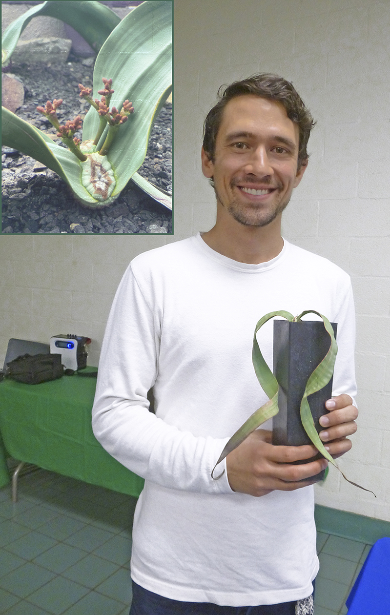 Matt Dunaj - Welwitschia Mirabilis