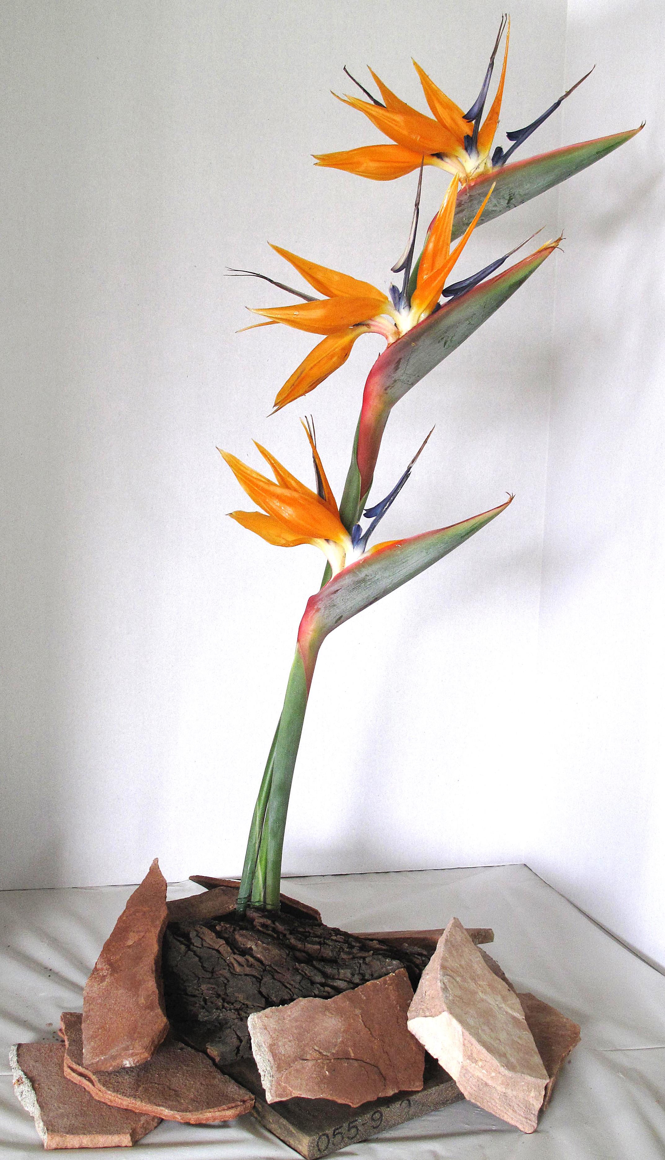 LAGC Flower Show 2013