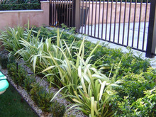 Garden design Melbourne