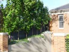 Landscape design Brighton townhouses