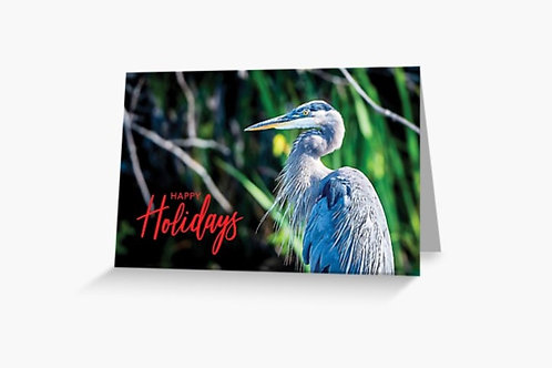 Great Blue Heron - 5x7 Greeting Card (Pack of 8)