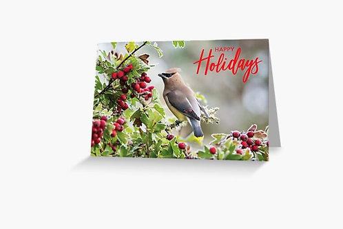 Cedar Waxwing - 5x7 Greeting Card (8-pack)