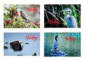 bird-variety-hero.jpg