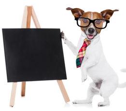 Kynoart in Rotkreuz, Individuelles Hunde Training, Hundewelpen Coaching, Hunde Zucht Beratung sowie Hunde Kaufberatung
