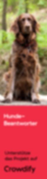 Hunde Beantworter Crowdify