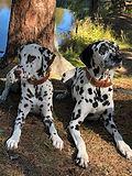 Vasco & Noia