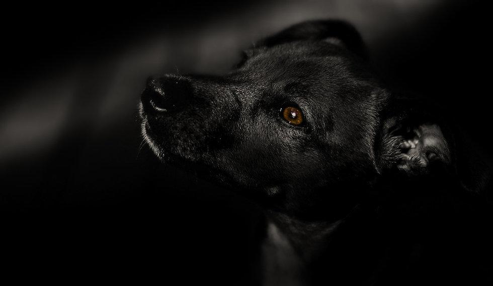 dog-4164762_1920.jpg
