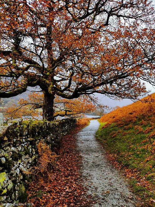 Autumn Walkway - Digital Print