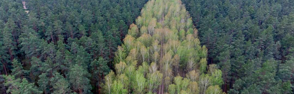 Waldbrandprävention