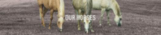 OUR HORSES3TEXT.jpg
