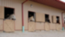Horses in Stalls.jpg