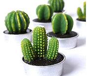 Cactus Tea Lights- Set of 6