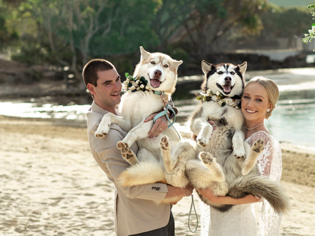 Can I have my pooch at my wedding?