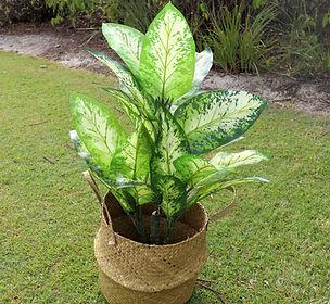 faux plant.JPG