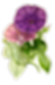 plant-3066879_640.png