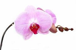 orchid-165218_1280.jpg