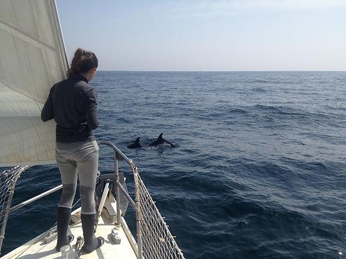 Dauphins nageant à l'avant d'un voilier lors d'une traversée en Méditerranée occidentale pour étudier la pollution microplastique