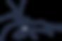 crevette bleue.png