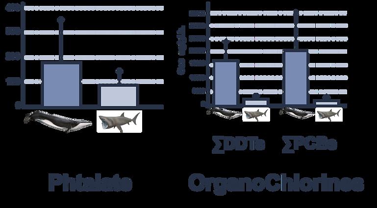 Graphes de comparaison de l'absorption de phtalates et d'organochlorines entre une baleine et un requin