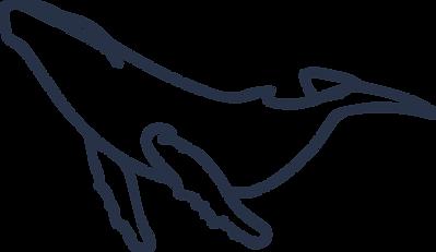 baleine bleue.png