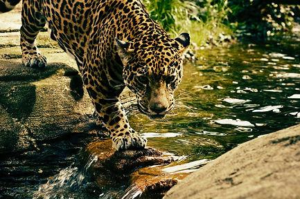 leopard-2578114_1920.jpg