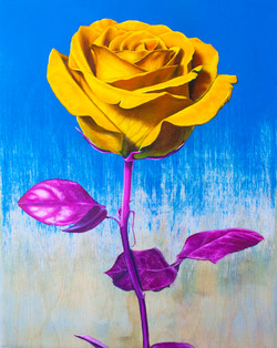 Rose Study #2