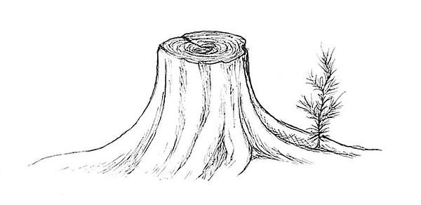 Stump.png