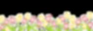 reihe-der-frhlings-tulpen-4008789_edited