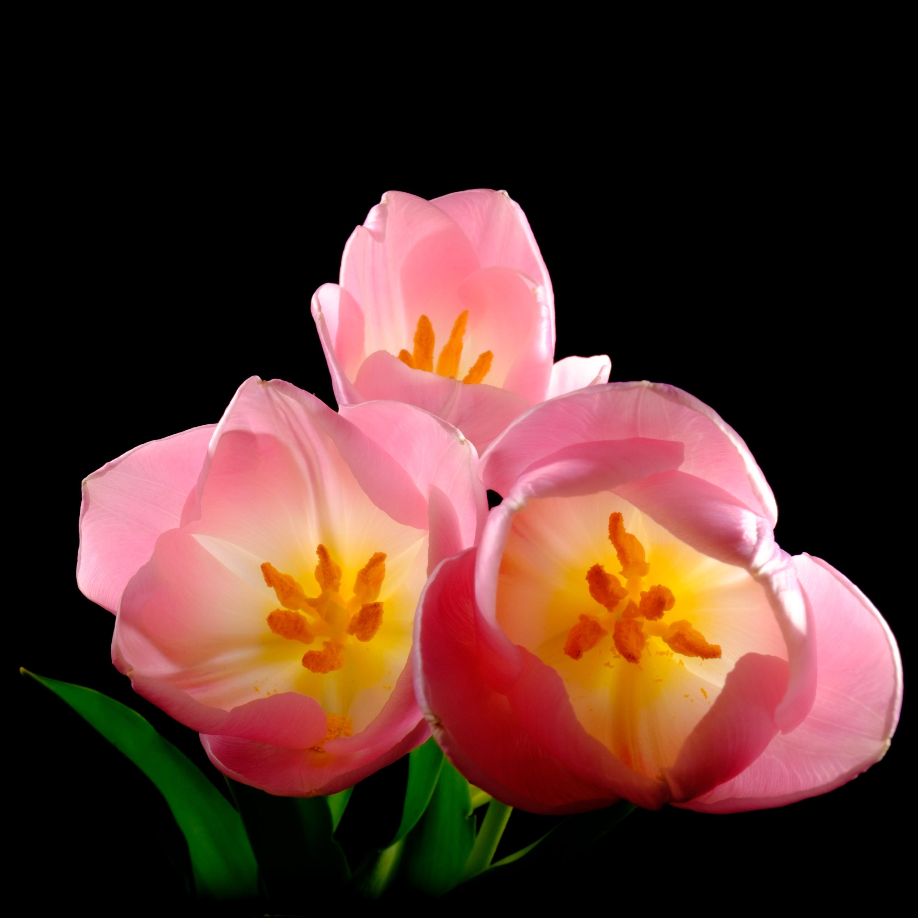 George Hawthorn Photography Pretty Flowers
