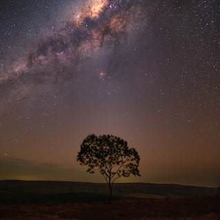 Árvore - Morro do Carvão-1.jpg
