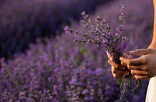lavender-3576132_bea.jpg