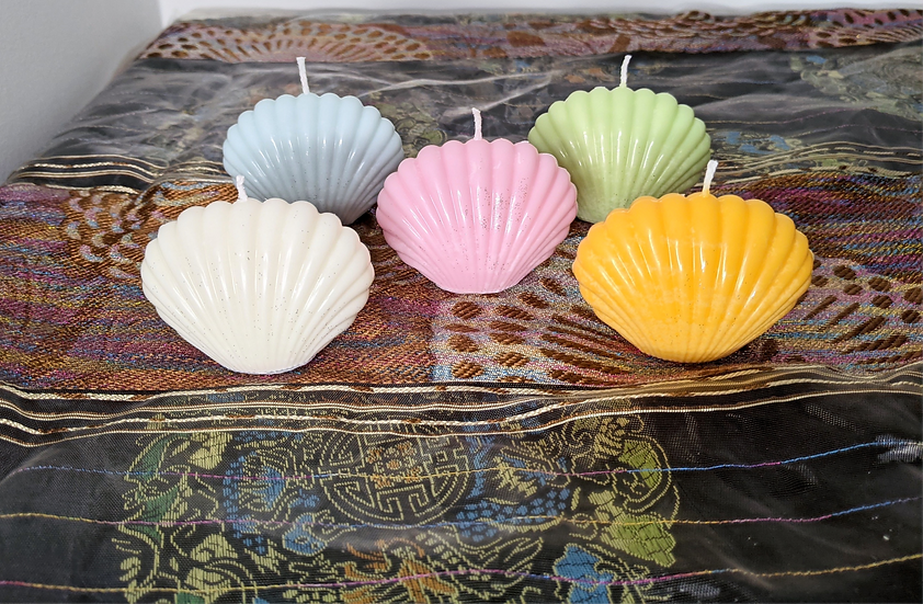 Sea Shell Full Collection