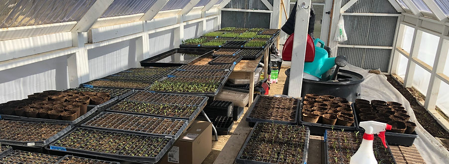 mbf-seedling-trays.jpg