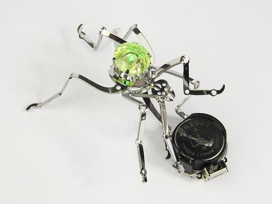 'TeclAntula' - Spider