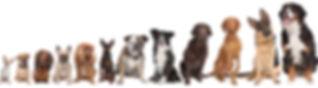 Orthopädisches Hundebett-Hundebett XXL-orthopädische Hundebetten-Hyggebed