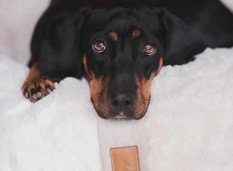 Orthopädisches Hundebett Erfahrungen