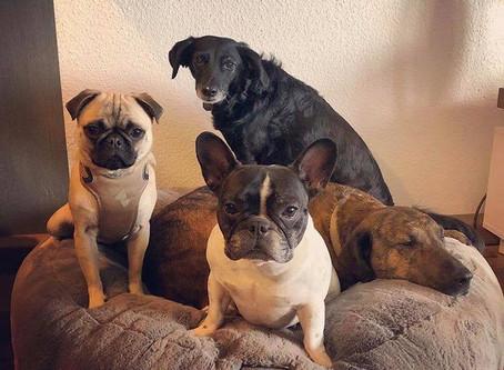 Die Hundegang im Hyggebed