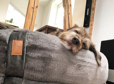 Milo in seinem neuen Hyggebed