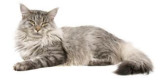 Hyggebed Orthopädisches Katzenbett/Katzenkissen mit hohem Liegekomfort.Viskoelastisch, pflegeleicht und waschbar.Für Mini bis XXL Katzen.DasTraum-Katzenbett made in Germany. Cosybed
