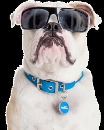 Boofhedz, bloody comfortable sunglasses